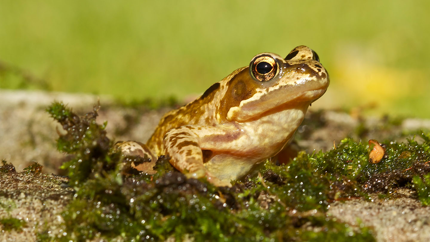What Do Frogs Eat And More Frog Facts
