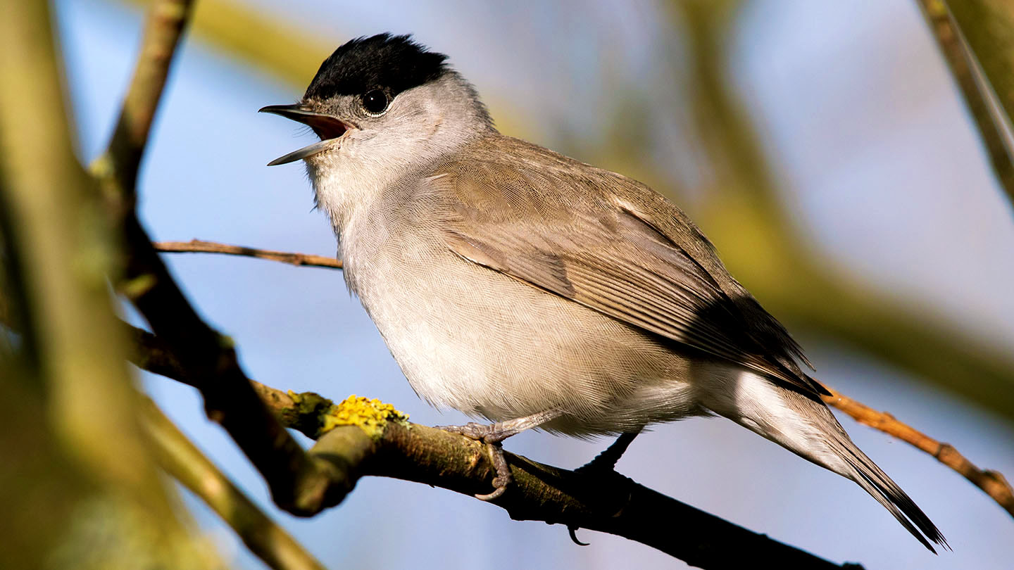Which Birds Migrate Who To Spot This Summer Woodland Trust