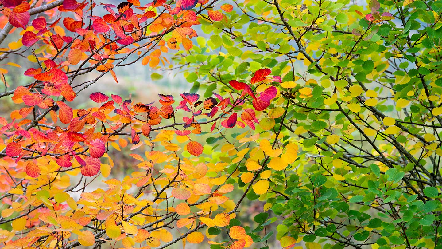 Autumn Trees To Plant In Your Garden Woodland Trust Woodland Trust